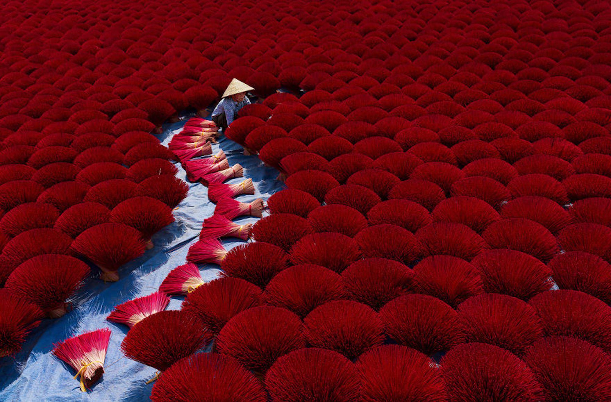 Plantação de incenso no Vietnã