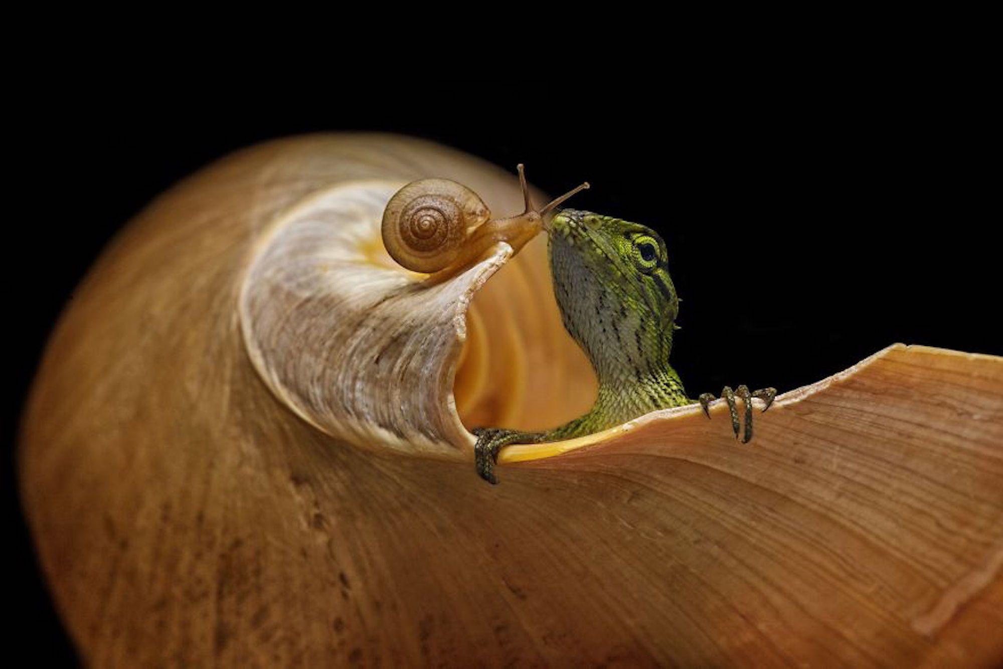 Um momento entre um lagarto e um caracol